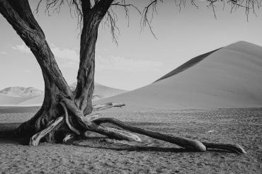Desert Tree, Namibia