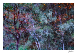 Fine Art Impression Photography by Susan Greeff of Always Summer Photography