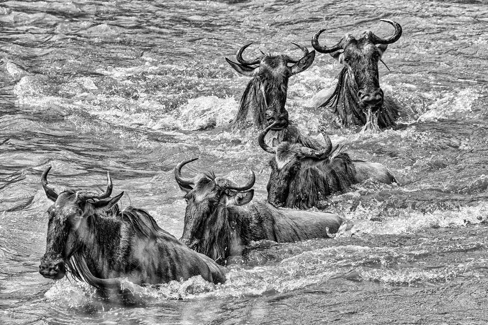 Wildebeest Migration, Susan Greeff; Photography
