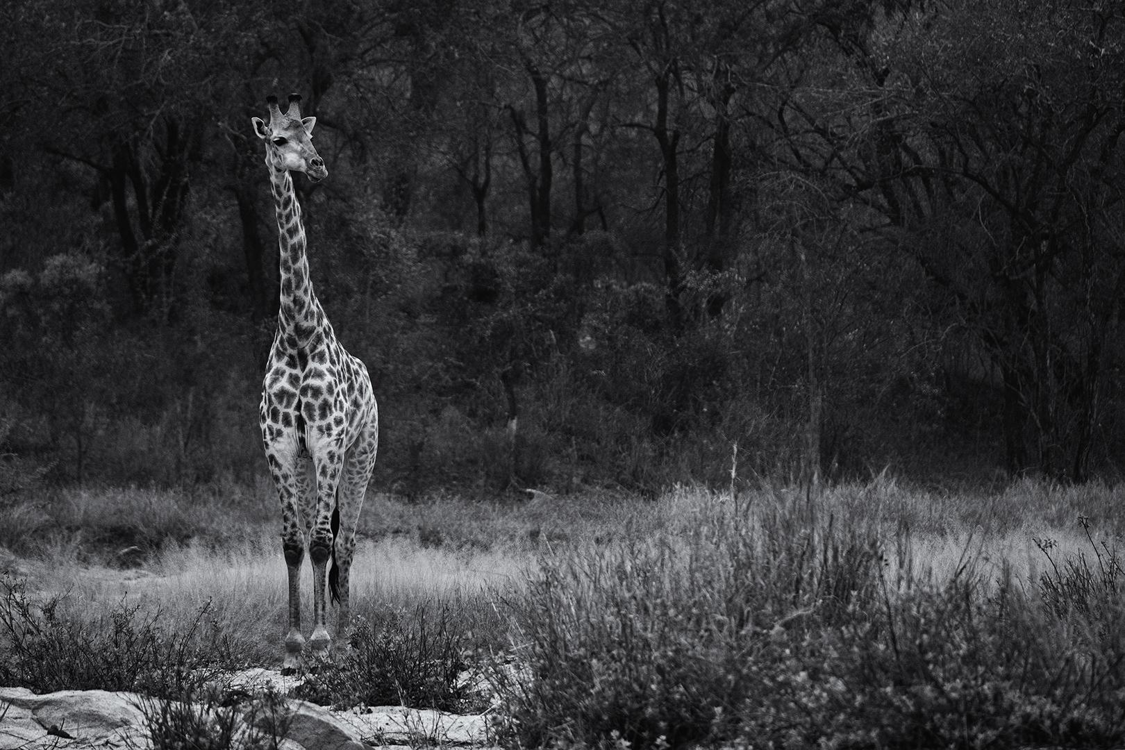 Susan Greeff Photographer